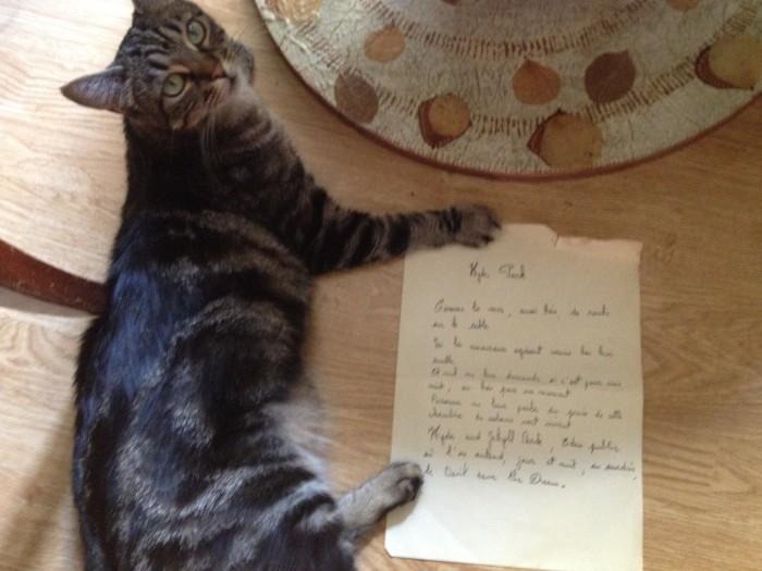 Les chats sont des poètes...