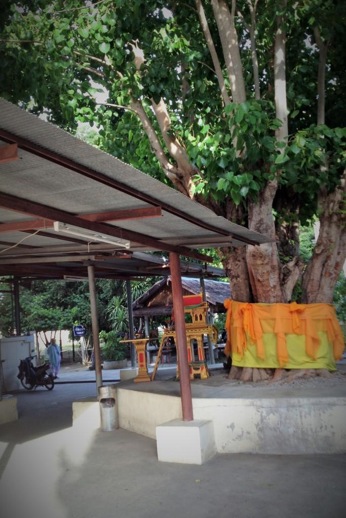 Un bel arbre du temple et la nonne en arrière-plan